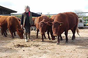 Bridgette in the yard with the Red Ruby Cattle
